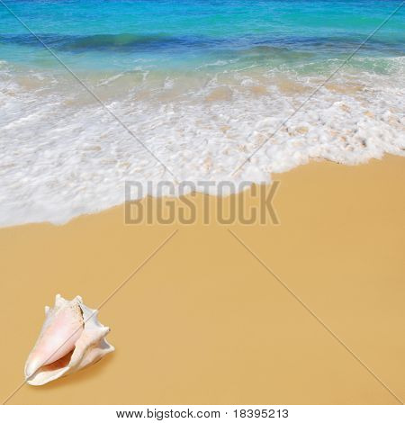 Caribbean ocean with sandy beach and big tropical seashell square background