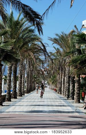 LAGOS, SPAIN - OCTOBER 27, 2008 -Cyclist and pedestrians along the palm tree lined promenade Lagos Malaga Province Andalusia Spain Western Europe, October 27, 2008.