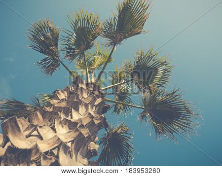 Retro Filtered Palm Tree Against Bright Blue Summer Sky