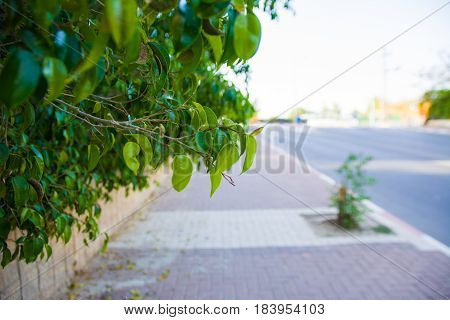 green leaves with sun shining dust from rain drops road abstract background with copy space