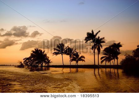 Romantic sunset in Zapata swamp area with palm silhouette on caribbean island Cuba