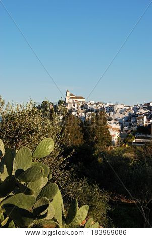 View of the white town with prickly pear cactus in the foreground Alozaina Malaga Province Andalusia Spain Western Europe.