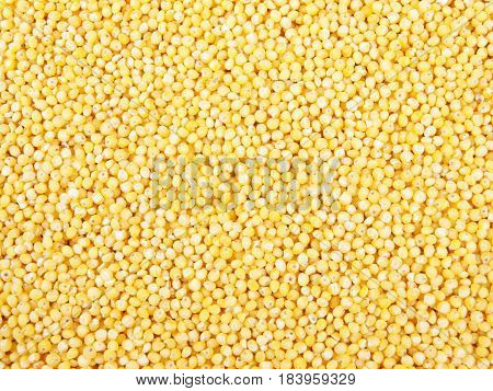 Millet dry seeds beautiful textured close up background