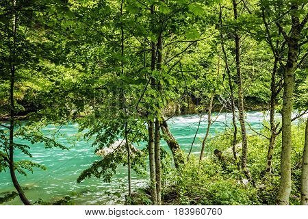 Bank of the mountain river and forest in Montenegro.