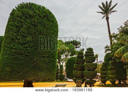 Cadiz city park, Spain. Genovese green garden