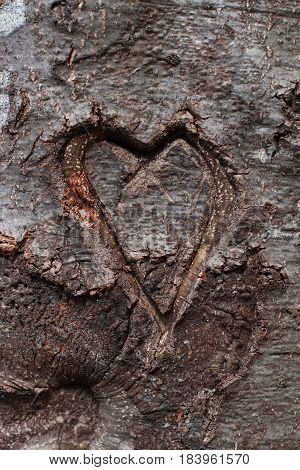 vertical front view of heart shape carved in the bark of tree