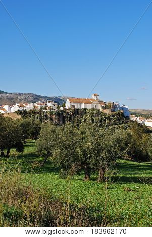 View of the church and town with olive groves in the foreground El Burgo Malaga Province Andalusia Spain Western Europe.