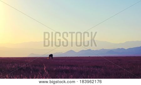 Lonely horse in Kazakhstan steppe on the mountain background