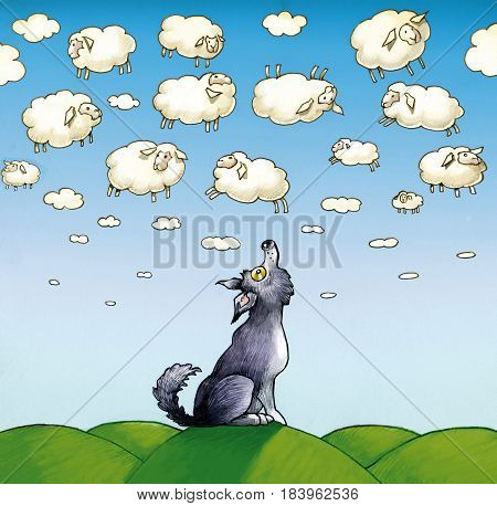 A wolf worn and eager looks at a sky with so many clouds that look like real sheep
