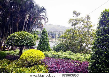 Lake, Mountain And Different Types Of Plants In Park