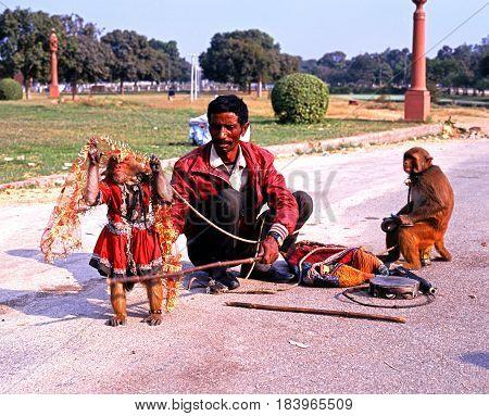 DELHI, INDIA - NOVEMBER 20, 1993 - Indian man with monkeys performing tricks in the city Delhi Delhi Union Territory India, November 20, 1993.
