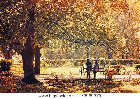 Autumn picturesque landscape city park - vintage tones processing. Colorful autumn landscape of park with yellowed autumn trees in sunny autumn day. Autumn background with beautiful autumn nature -autumn landscape view