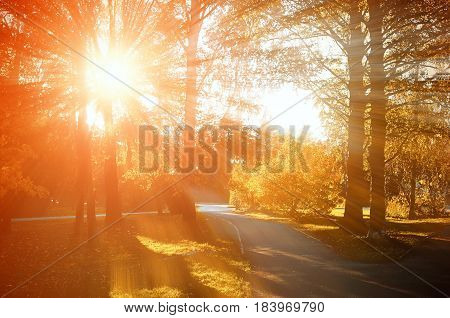Autumn landscape. Autumn natural view of autumn park in sunset. Sunny autumn landscape - colorful autumn nature in nice sunny weather at autumn sunset. Autumn landscape view