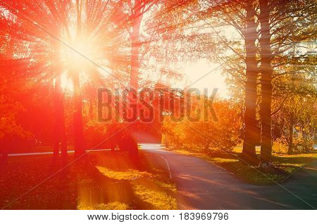 Sunny autumn park. Autumn natural view - autumn park in sunset. Sunny autumn landscape colorful autumn nature in nice sunny weather at autumn sunset - autumn landscape view