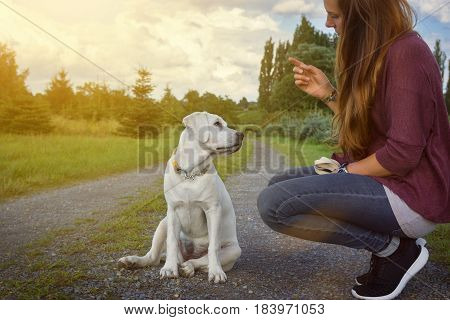 young woman trains and teaches a cute little labrador puppy how to sit