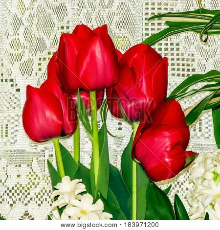 A close-up of red tulips against white curtains.