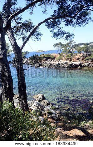 Mediterranean Landscape In Capelan, Bandol, France