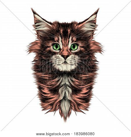 kitty baby breed Maine Coon head is symmetrical sketch vector graphics color picture