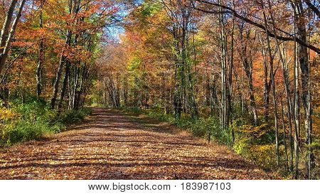 A beautiful Autumn hiking trail trough this park in Long Valley New Jersey.