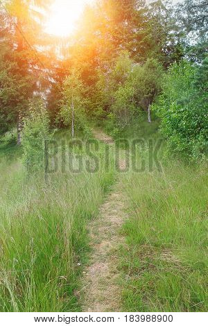 Trodden path on the of the forested mountain in sunlight