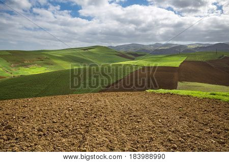 Plowed and planted fields under a blue sky with clouds