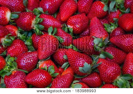 A scattering of ripe fresh juicy delicious strawberries