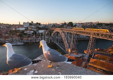 Seagulls sits on the background of Douro river and Dom Luis I Bridge, Porto, Portugal.