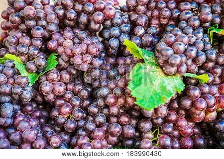 Red wine grapes background dark grapes blue grapes Red Grape Cardinal Grape Emperor Grape