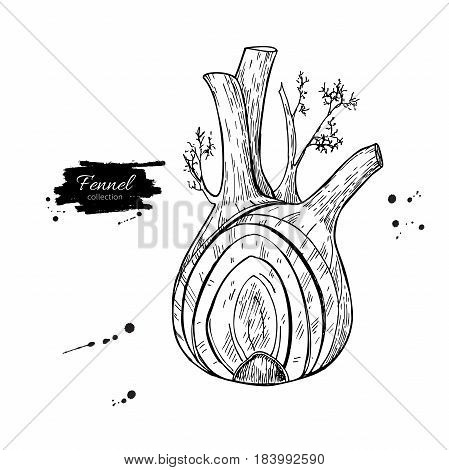 Fennel hand drawn vector illustration. Isolated Vegetable engraved style object with sliced pieces. Detailed vegetarian food drawing. Farm market product. Great for menu, label, icon