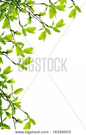 spring branch frame isolated on white