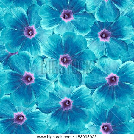 Seamless infinite floral background. For design and printing. Background of natural blue-turquoise Violets. Nature.