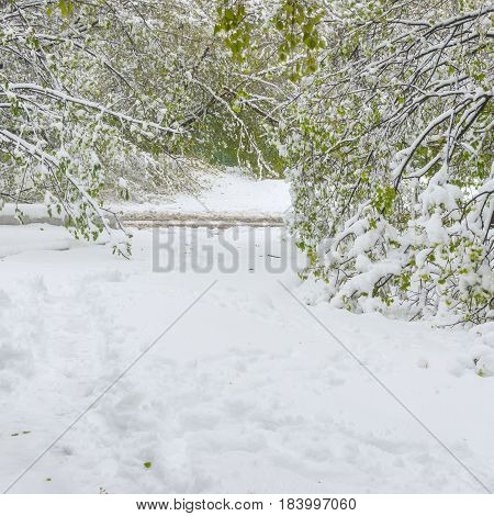 April landscape with path in snow after unexpected snowfall in Dnepr city Ukraine