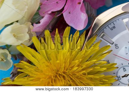 Flower and clock in macro. Spring time has come. Macro shot - Spring blossoms wallpaper