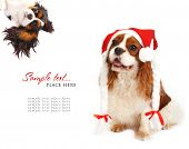 Cavalier king charles spaniel wearing a santa hat. poster