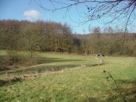An English Pasture