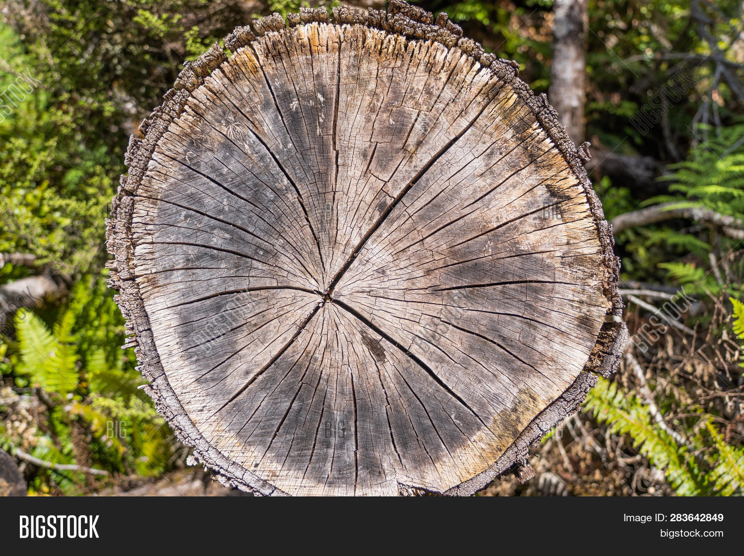 Wood Texture Of Cut Tree Trunk Close Up Detail Annual Rings Create A Lightbox