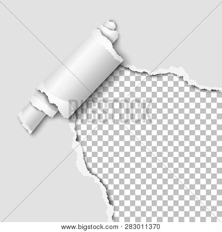 Torn Lower Right Corner Of The White Sheet Of Paper With Paper Curl. Transparent Background Of The R