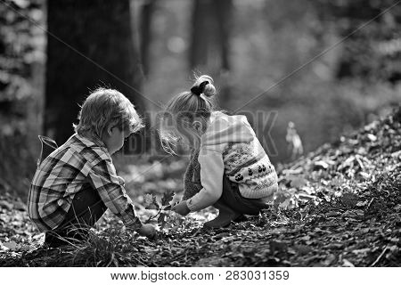 Childhood And Child Friendship. Children Pick Acorns From Oak Trees. Brother And Sister Camping In A