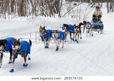 Grand Portage, Mn - January 29, 2019: Erin Altemus Team Comes Into Mineral Center During The John Be