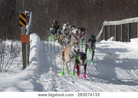Duluth, Mn - January 27, 2019: Ryan Redingtons Team Crosses Bridge During The John Beargrease Sled D