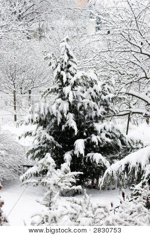 Winter Scene With Snow And Bird