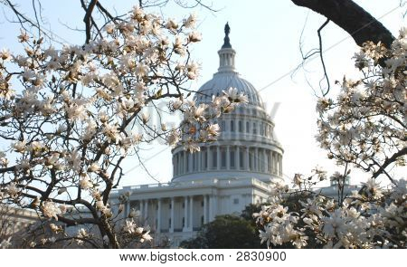 The Spring Capitol.