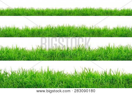 Green Grass Border Isolated On White Background.the Collection Of Grass.(manila Grass)the Grass Is N