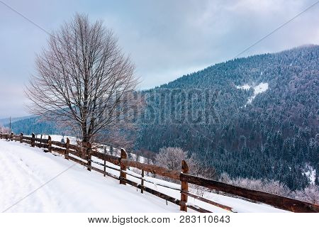Beautiful Winter Countryside In Mountains. Wooden Fence And Tree Along The Snowy Slope. Cold Blue Mo