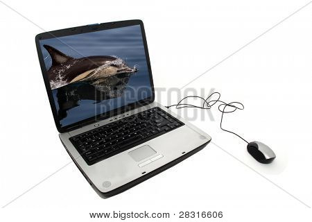 portable pc with dolphin photo in the laptop
