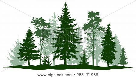 Evergreen Forest Pine, Tree Isolated. Park, Alley Christmas Tree. Vector Illustration. Landscape Of