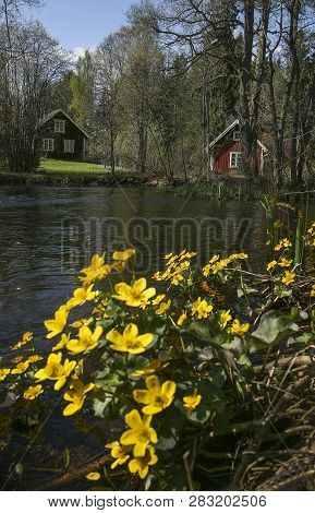 Yellow Flower Growing At The Edge Of A Small Watercourse