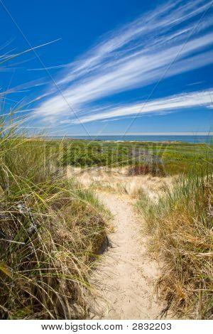 Sandy Path Through The Dunes