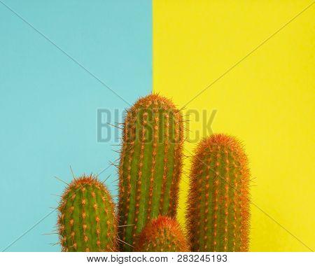 Cactus Fashion Design. Minimal Fashion Stillife. Trendy Bright Colors. Green Cactus On Yellow And Bl