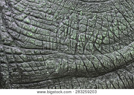 Dinosaur Skin Texture, The Surface Of Plaster With Uneven Skin Like Animal Skin
